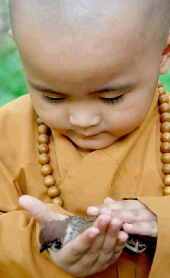 buddhist-child-and-sparrow.png